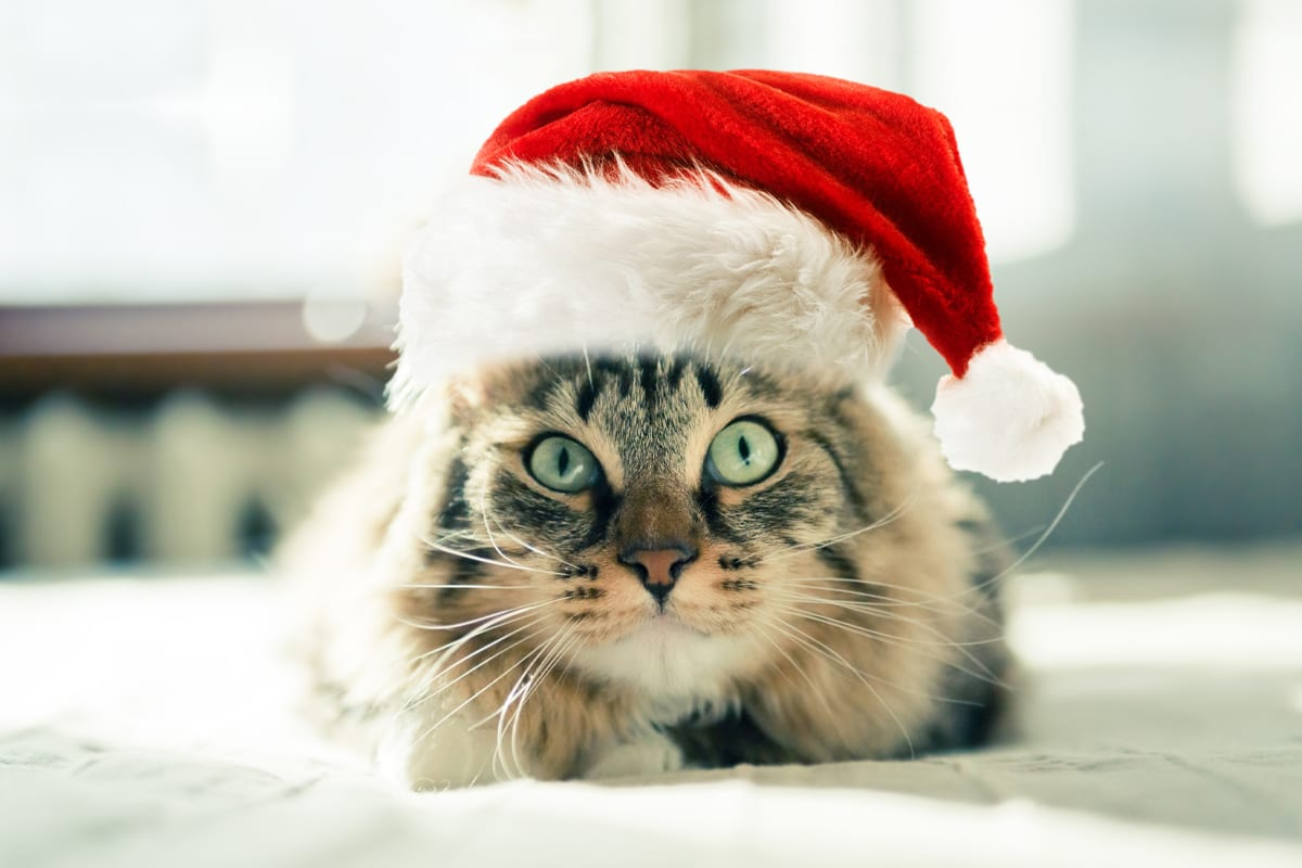 Cats & Company: Preparing for the Holidays
