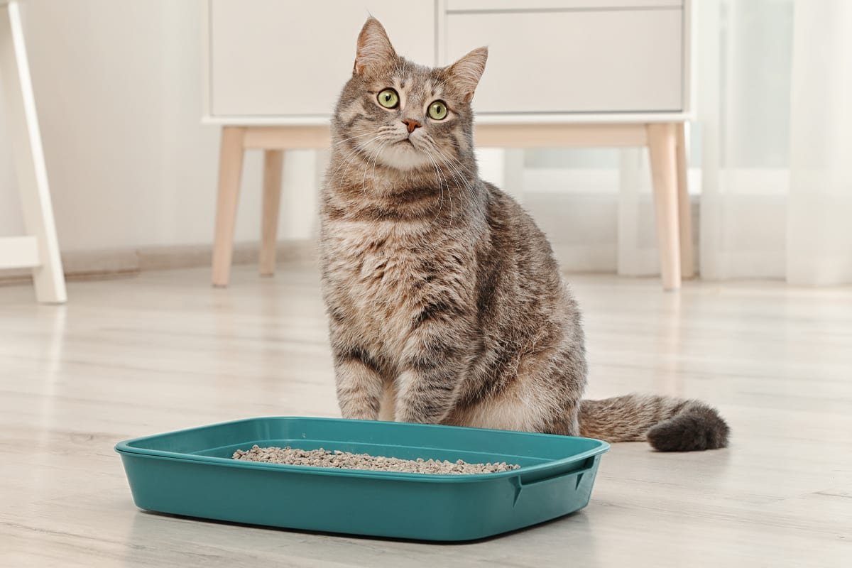Here are some general rules when selecting a litter box for your cat.